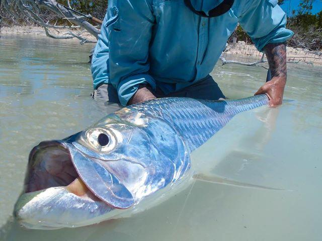 Tarpon Release Andros Island