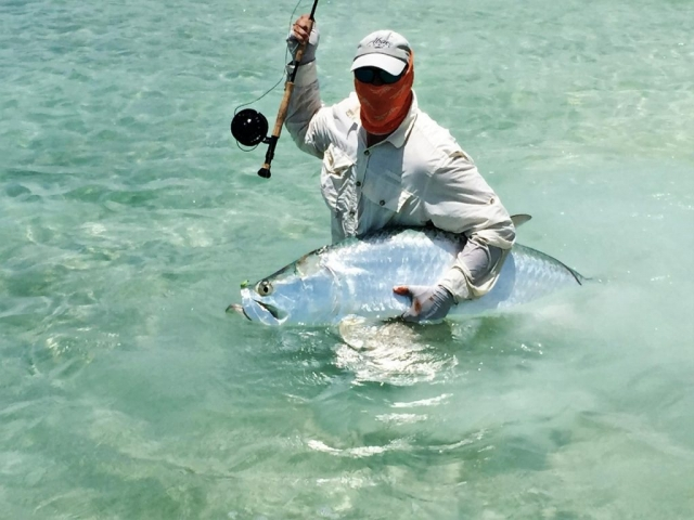 A Typical Andros Island Tarpon about to be released